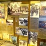 zoo-elefanthuset